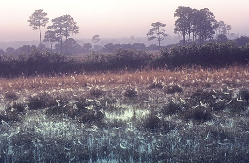 Spider Webs Covered With Dew in a Florida...