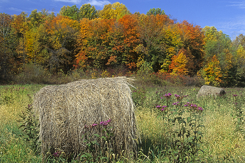 Hay Bails and Fall Folliage, Indiana