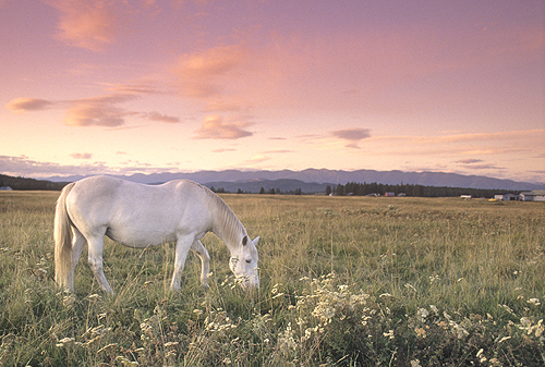 Horse in a Field of Wildflowers at Sunrise,...