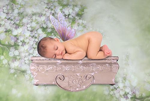 Baby Fairy Asleep on a Shelf