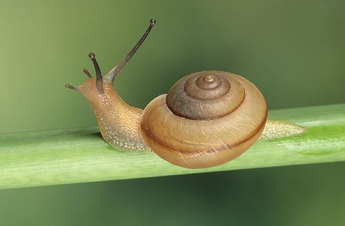 Snail, Florida