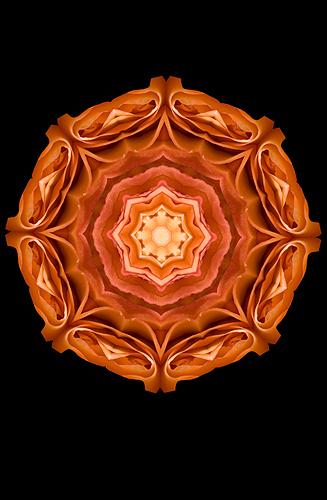 Nature Design-10 Rose