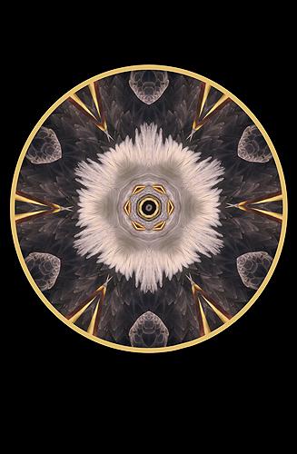 Nature Design-15 Bald Eagle