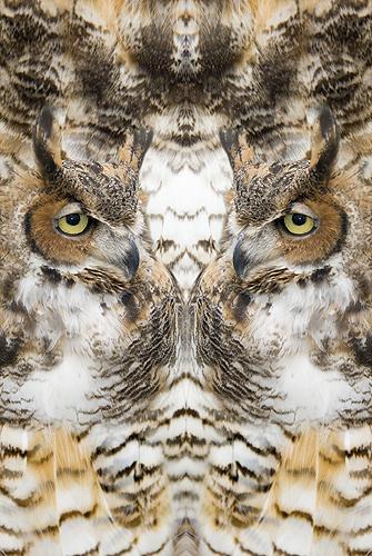 Nature Design-18 Owl