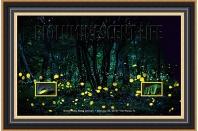 2018 Bioluminescent Life Fireflies Framed Art