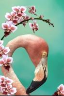 Flamingo Portrait and Orchids