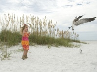 Hayden and the Scary Seagull