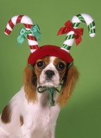 Puppy Wearing a Candy Cane Hat