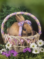 Bunny in a Spring Basket