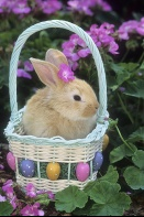 Bunny in an Easter Basket