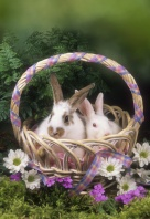 Two Bunnies in a Spring Basket
