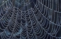 ""\""""A Spider's Work of Art"""", Close Up Detail With Dew""198|129|?|en|2|be8f4a0877d12ea699483862313daba2|False|UNSURE|0.28052082657814026