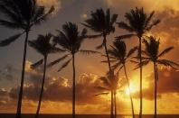 Palm Trees and Sunrise, Hawaii