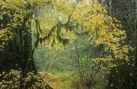 Fall Folliage, Hoh Rainforest, Washington