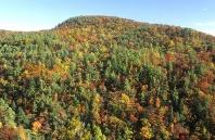 Fall Folliage, Near Highlands, North Carolina
