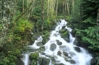 Waterfall and Moss Covered Rocks, Washington