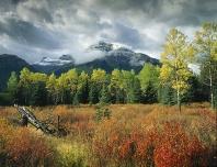 Fall Scene Banff National Park, Canada