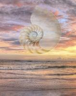 Natilus Shell in Sunset