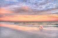 Florida Sunset and Pink Conch Shell