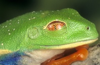 The Third Eye Lid Called a Nictitating Membrane is Used When Sleeping and Jumping.