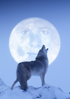 Erick, The Brave Coyote and the Man in the Moon