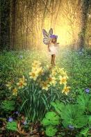 Taylor, Daffodil Fairy