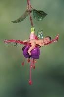 Hannah, Baby Fuchsia Fairy