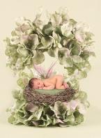 Baby Hydrangia Fairy