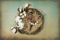 Asleep in a Nest of Cotton