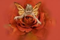 Hayden, The Rose Fairy