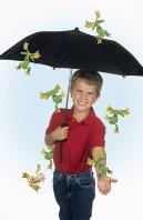 Stephen, Raining Frogs