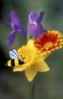 Lucian, Busy Little Bee