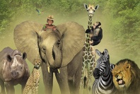 Jacquez, African Safari