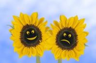 Happy and Not So Happy