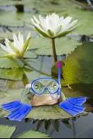 Frog at The Lily Pond