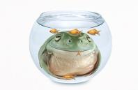 The Gold Fish Bowl