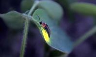 Lightning Bug, Lafayette, Indiana