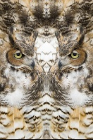 Nature Design-18 Owl