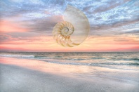 Nautilus Shell at Sunset